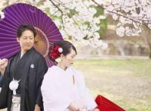 公園の桜と一緒に和装前撮りロケ