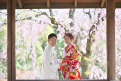 枝垂桜と共に和装前撮り