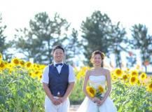 ひまわり畑にて洋装前撮りロケーション